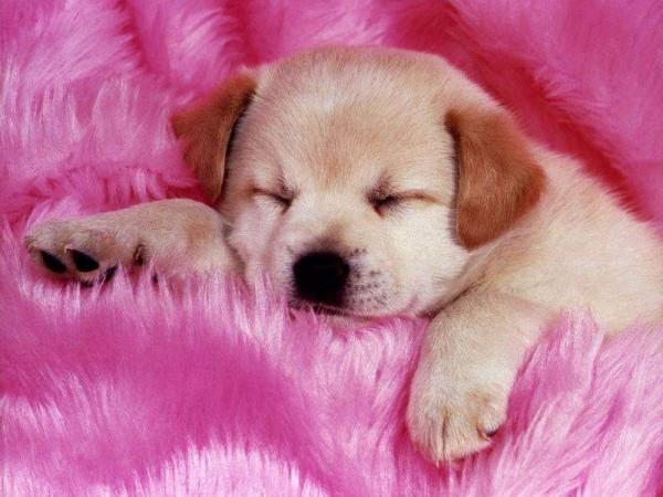 yo (osea la mejor): Este Es Mi Perro Es El Mas Lindo No Lo Creen
